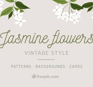 Jasmine Flowers Vector Graphics