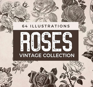 64 Vintage Rose Illustrations