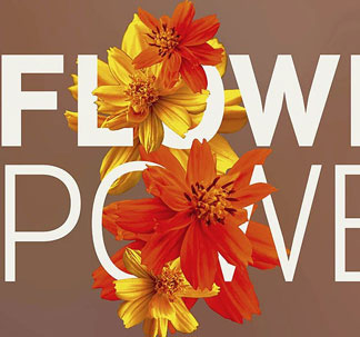 Flower Power Photos & Graphics