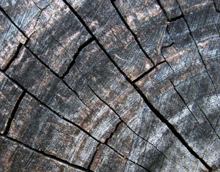 Grainy Wood Textures Pack For Premium Members