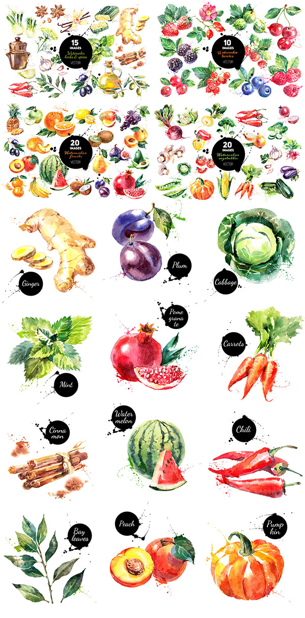 Watercolour Vector Sets
