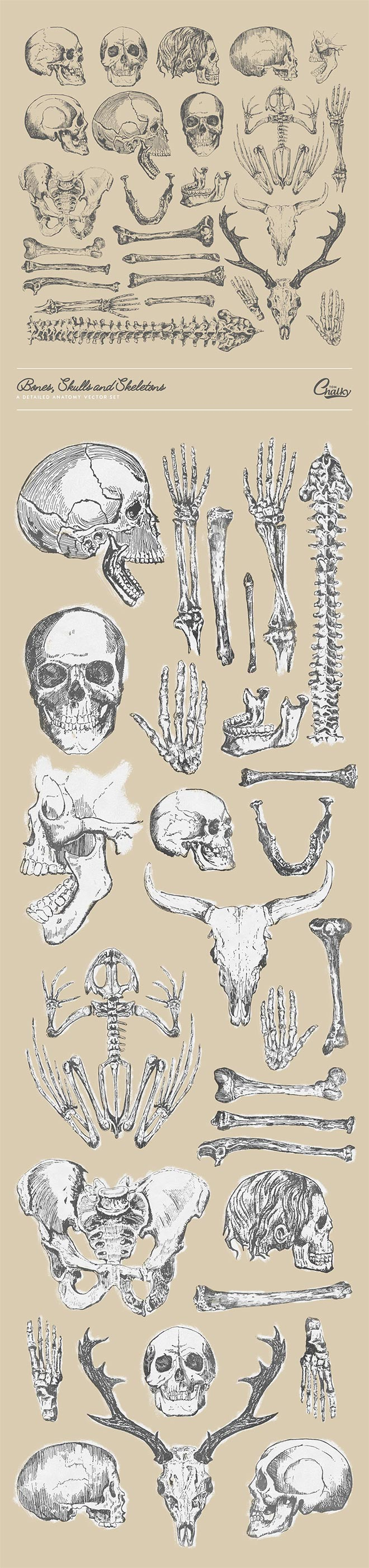 The Bones, Skulls and Skeletons Vector Pack