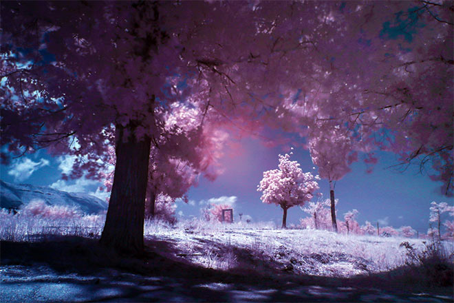 Infrared by Jack R. Seikaly
