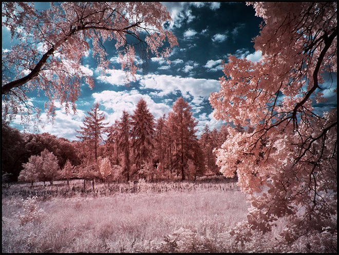 Tegeler Forest Berlin Infrared by MichiLauke