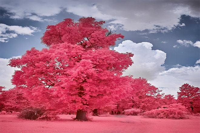 Spring Forest by Mugurelm