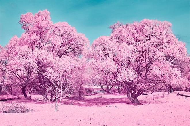 Pink Springtime by Mugurelm