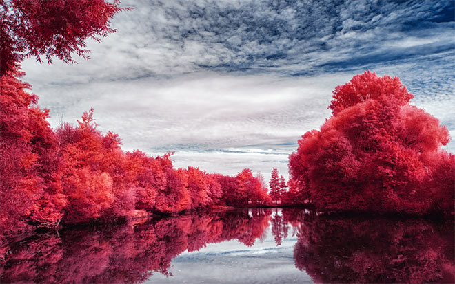 Infrared Trees by myINQI