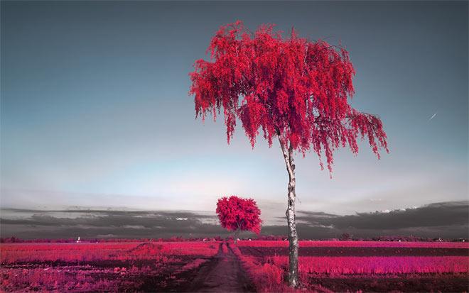 Trees Ekatachrome EIR Look by myINQI