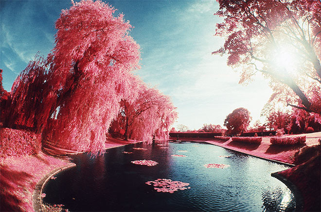 Pink Wonderland by Christopher Boyd Martin