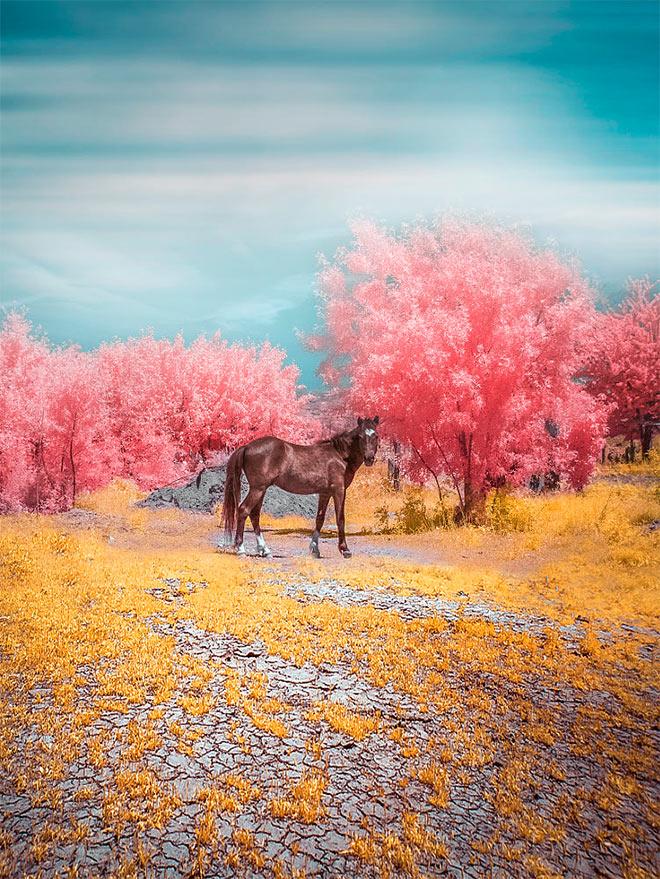 Wingless Pegasus by Rui Barreira