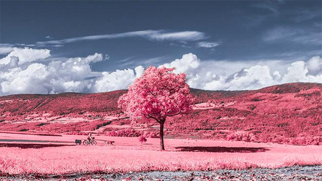 La Vie En Rose by Alexandre Lachausse