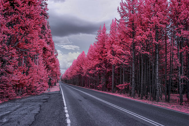 Infrared Color by Manish Mamtani