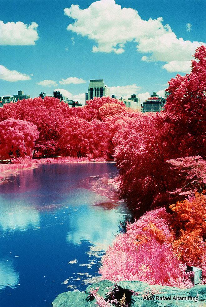 Central Park by Aldo Altamirano