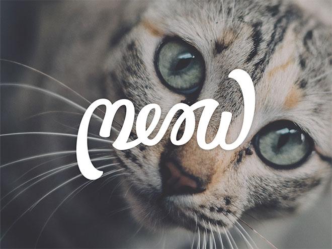 Meow by Ian Barnard